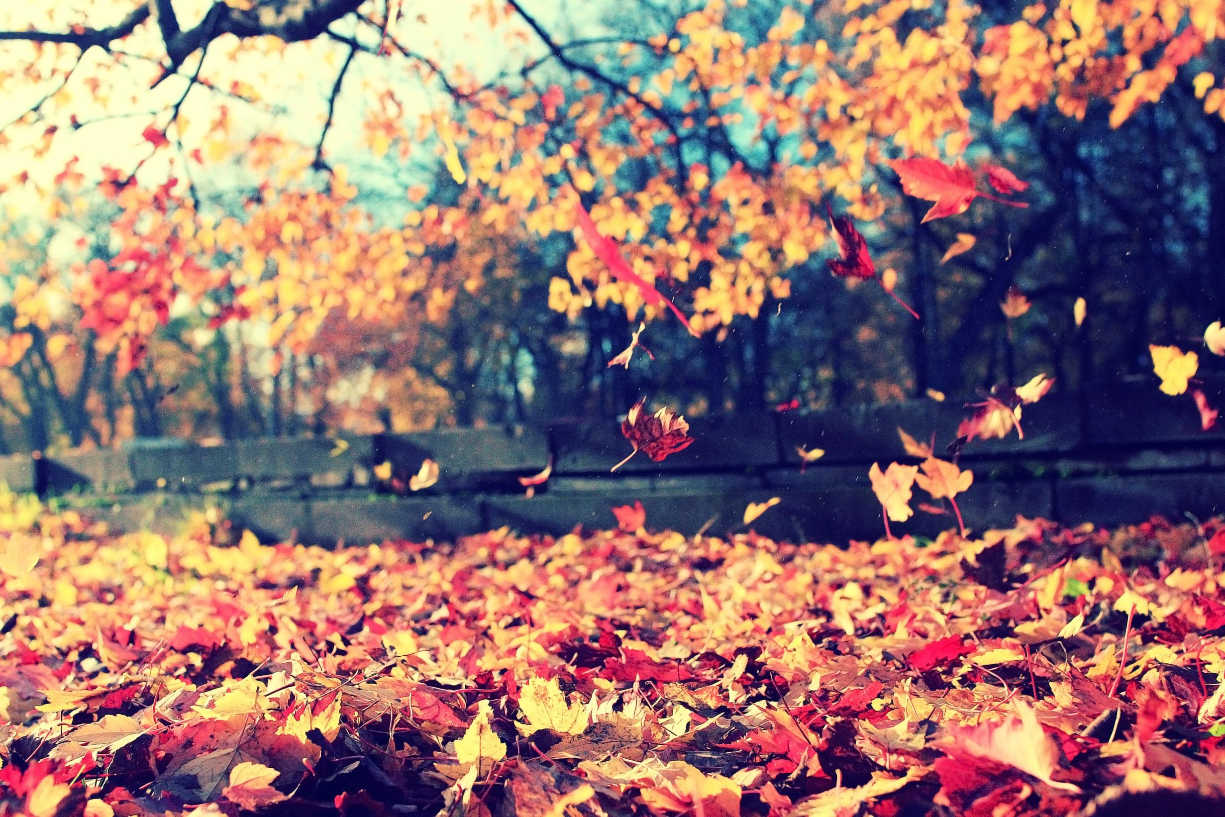 Bien-être en automne